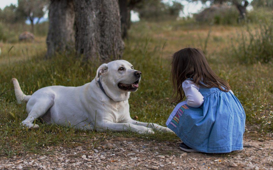 Gode grunde til at du skal anskaffe dig en hundelem